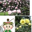 おとぎの森公園バラ