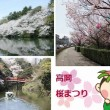 高岡桜まつり2017