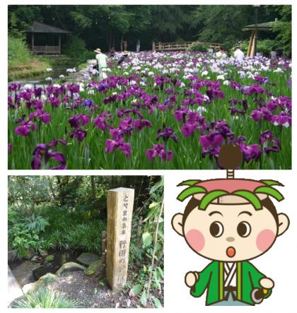 000428行田公園花しょうぶ