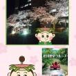 まつかわ夜桜見物